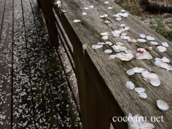 デッキに舞い落ちる桜の花びら
