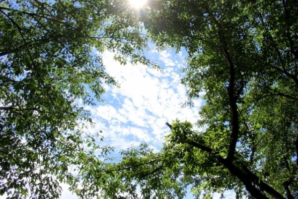 木漏れ日と空