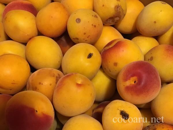 無農薬の完熟梅