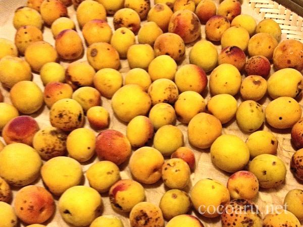 梅酵素ジュースの梅たち