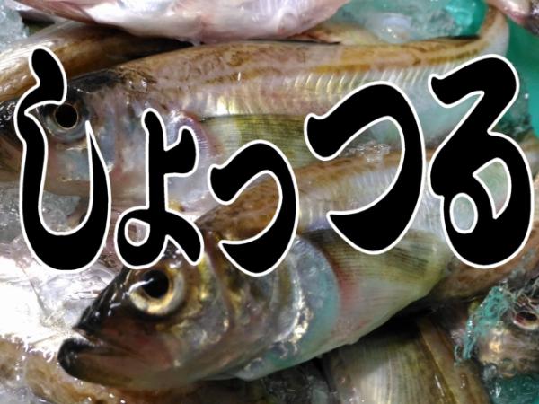 ハタハタ(しょっつる)