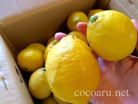 オーガニックな広島産のレモン