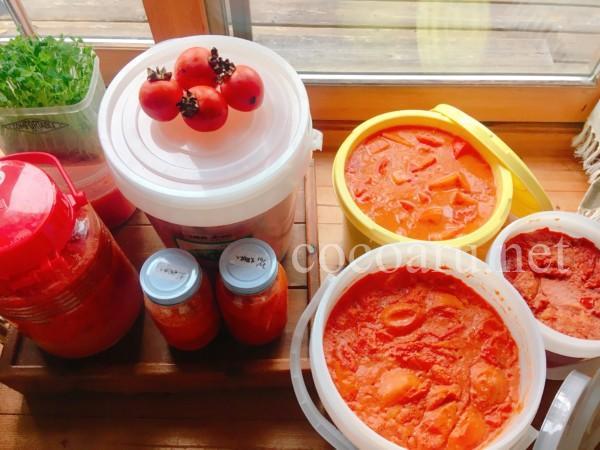 柿酢の大量仕込み