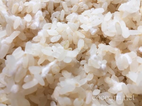 米麹の増やし方:友麹(約17時間後に1回めの切り返し)